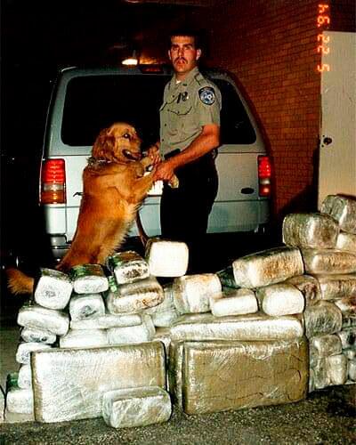 Можно ли обмануть полицейскую собаку?